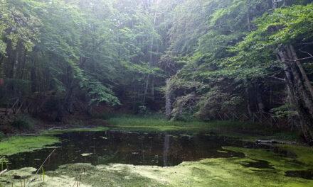 Bosco Rubbio – Acquatremola – Lago Duglia | Il sentiero delle tre fontane